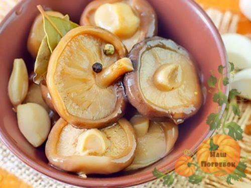 рецепты из груздей заготовки на зиму