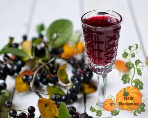 Вино из черноплодной рябины в домашних условиях на дрожжах