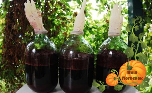 vino s perchatkoj aronija
