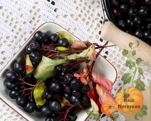 chernoplodnaya-ryabina-recepty-prigotovleniya-na-zimu
