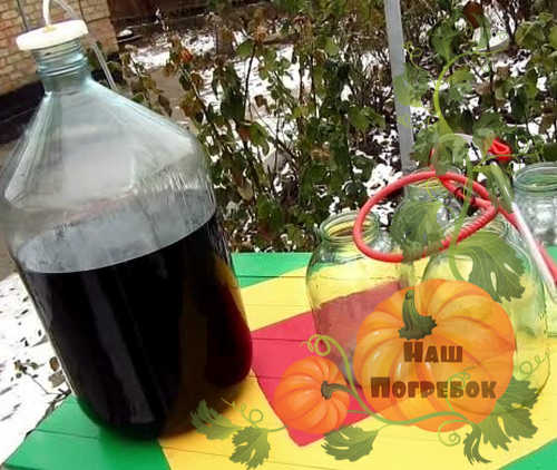 prigotovlenie-vina-iz-vinograda-izabella