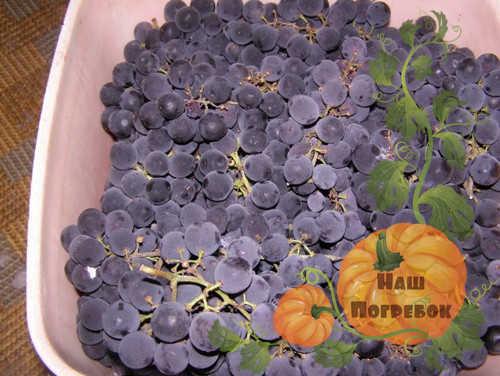 vinograd-izabella-dlya-vina